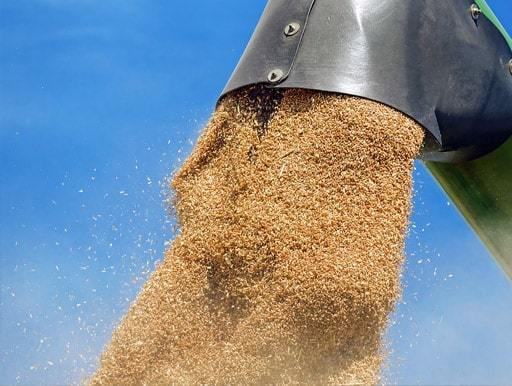 Сбор урожая и экспорт пшеницы из России