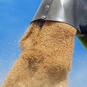 Пшеница на экспорт из России