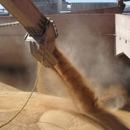 Wheat export