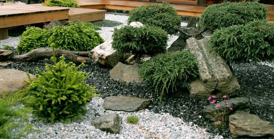 Камни и растения уложенные во дворе