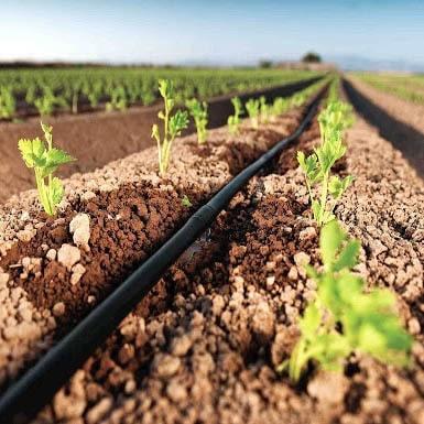 Полив и подкормка растений био-удобрениями